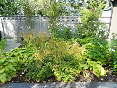 New Danforth backyard by garden muses-not another Toronto gardening blog