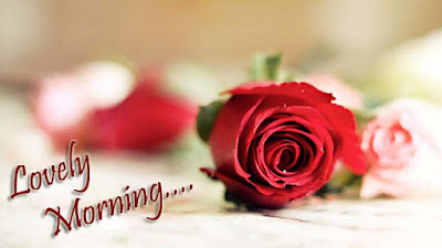 lovely-morning-rose-for-my-love