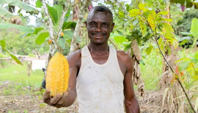 Cote d'Ivoire is the world's largest producer and exporter of cocoa beans and a significant producer and exporter of coffee and palm oil.