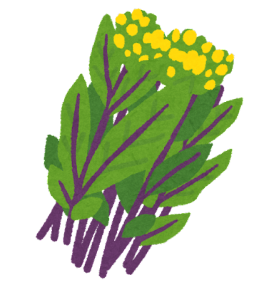 紅菜苔のイラスト