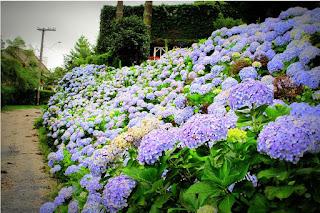 4741c4035 ... é dominada por uma rica vegetação; sua flora é parte do ecossistema da  Mata Atlântica e suas matas estão repletas de diversas espécies de árvores,  ...