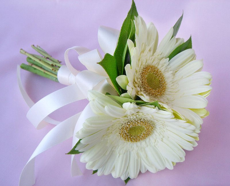 Yellow Color Wallpapers: White Gerbera Daisies