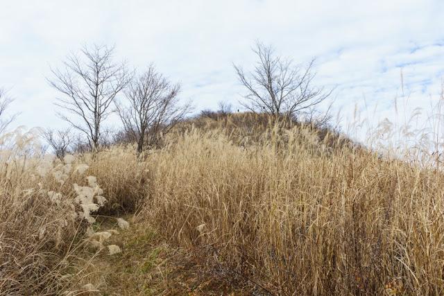 大平山山頂直下のカヤト