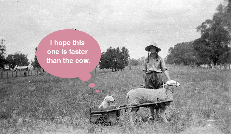 I hope this one is faster than the cow.