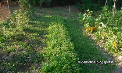 pomodoro broccolo cavolo nero porri tagete bietola fragole fragoline di bosco girasole cipolla verza viola insalata zucchine