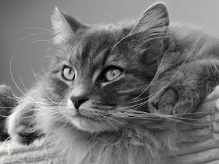 cara merawat kucing dan harga adopsi