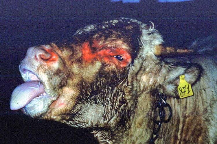 Sabîment les dents de pour les parasites