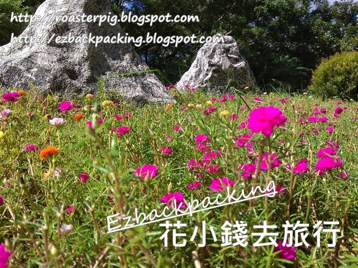 九龍公園小花海