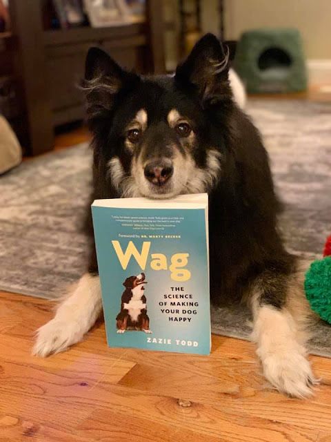 Wag Happy Dogs: A Photo Post (Part 1)