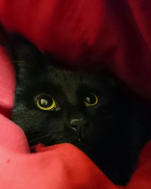 Foto kucing hitam imut dan lucu