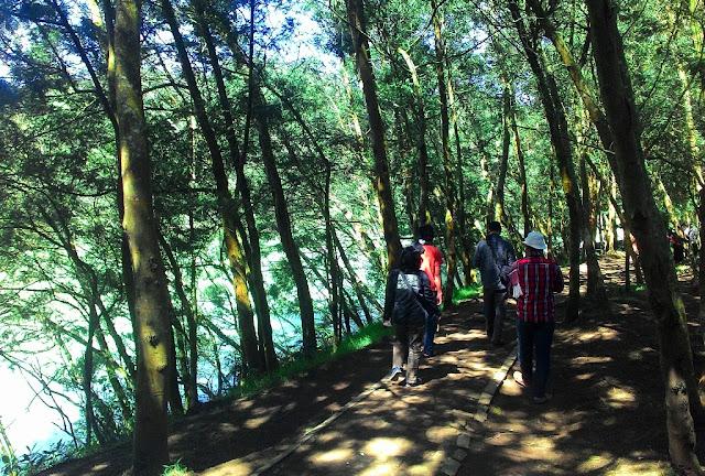 Hutan Hijau di Lokasi Masuk Danau Telaga Warna Dieng Plateau