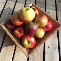 Photo of a square bamboo bowl filled with assorted Washington State apples grow from Spirit Wild Farm in Carnation, WA. Includes yellow and red apples. https://trimazing.com/