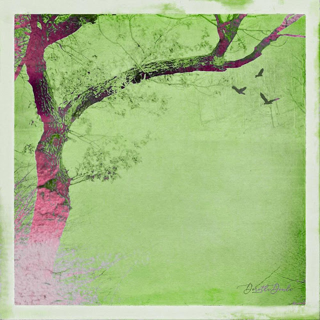 zen, alter Baum, tree, Dorothe Domke, Fotokunst, Kunst, art, photoart, zenfofografie, Sauerland, birds, Vögel