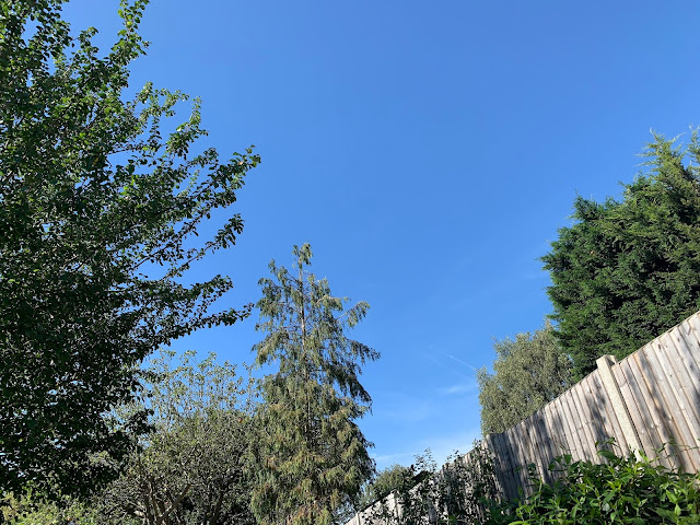 blue sky and green trees above my garden
