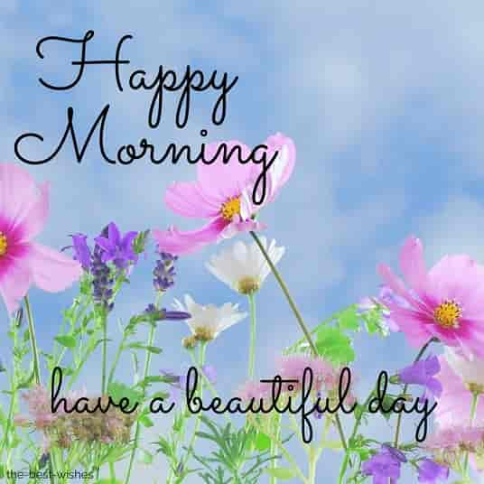 happy morning nature with pink flowers