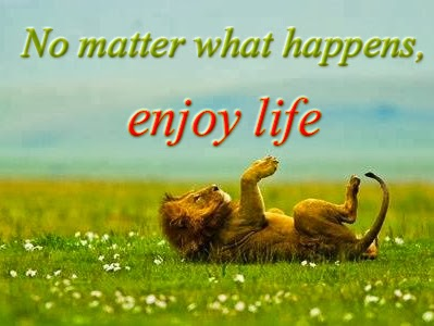 Brainy Funny Quotes Wallpapers Enjoy Life Quotes Enjoy Quotes Life Quotes Free Pictures