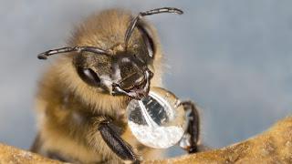 Πωλείται 1 τόνος θυμαρίσιο μέλι και 1 τόνος ρείκι με πεύκο από Κρήτη