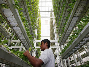 Mengintip Sistem Pertanian Efektif dan Unik di Singapura, Penasaran?