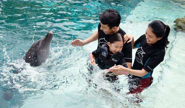 Paket Wisata di Dolphin Island