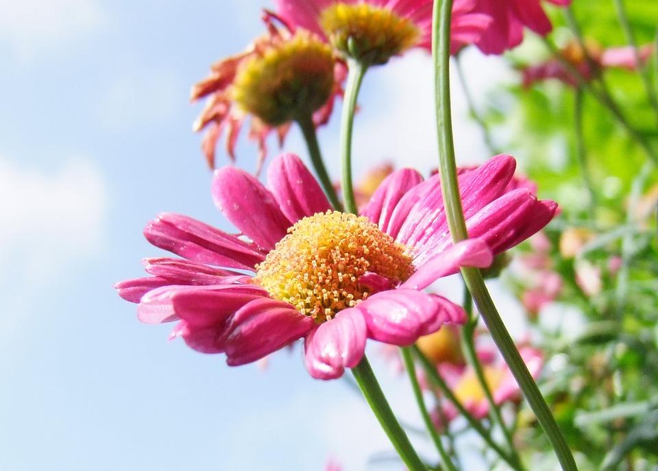 flores-de-primavera