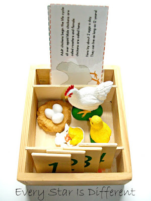 Life Cycle of a Chicken Activity for Kids