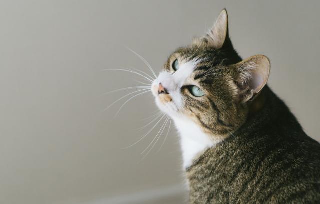 Benarkah Orang Jepang Menyukai Kucing Karena Mereka Tsundere? Ini Jawabannya