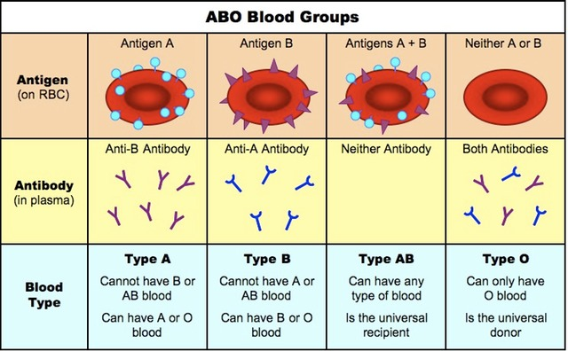 Accept. opinion, abo blood group genetics
