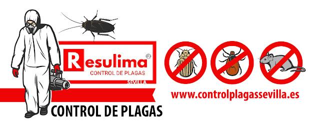 control plagas locales