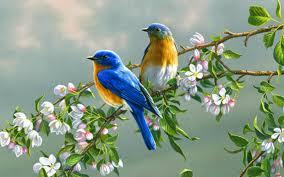 पक्षी सर्दियों के लिए दक्षिण की ओर क्यों उड़ते हैं?