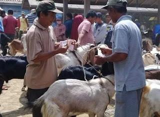 Jualan kambing menjelang Hari Raya Idul Adha