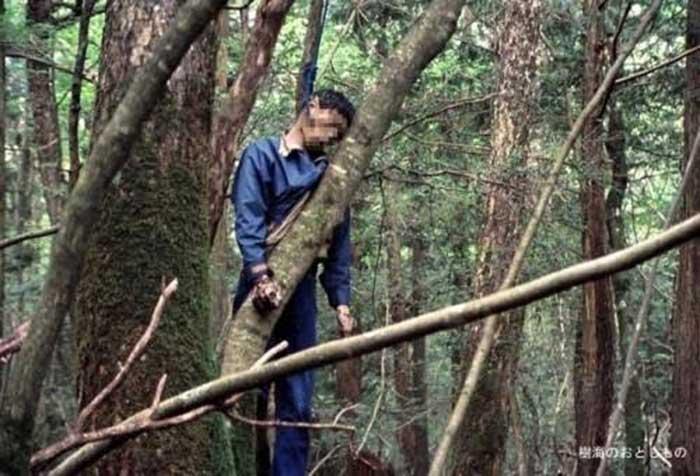 Ada Petugas yang Rutin Berpatroli di Hutan Aokigahara