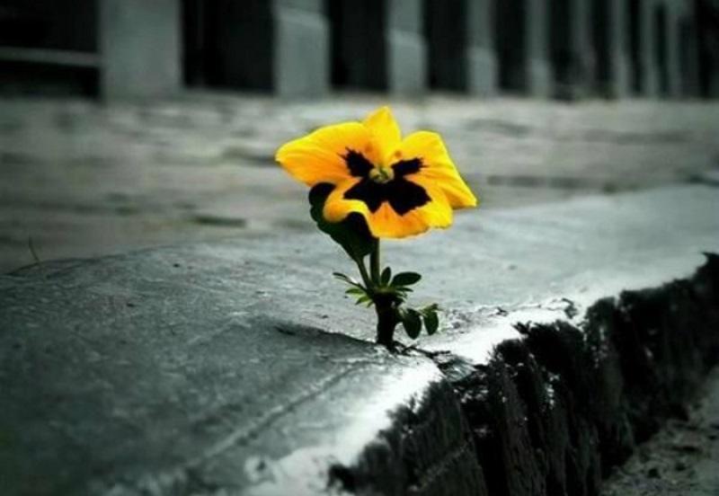 Como Posso Manter a Minha Esperança em Meio a Adversidade?