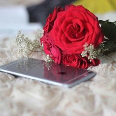 red rose on iphone