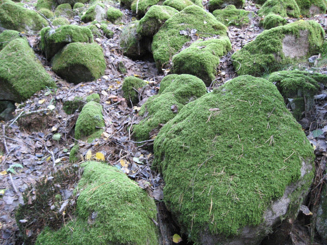 Tips til lettvint bruk av mose - mosesteder i skogen