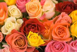 https://1.bp.blogspot.com/-T5KRO8gBTAk/V6HMwb1lWuI/AAAAAAAAP0Q/NSAoIXG08KcE425vbmZtVbalHW9NMArIgCLcB/s1600/roses.jpg