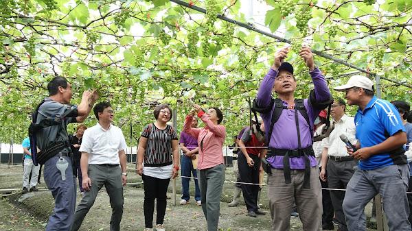 穿戴式省力輔具農事輕鬆做 葡萄農友遠離腰酸背痛