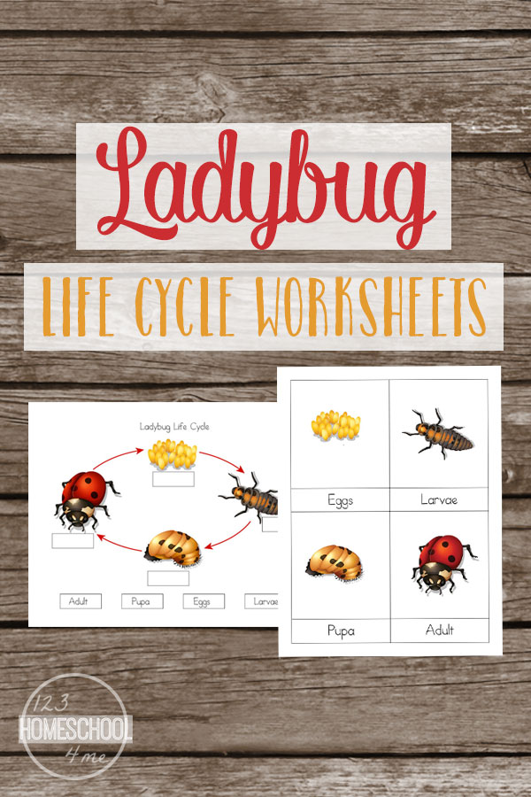 1st Grade 1st grade science worksheets free : Life Cycle of a Ladybug Worksheets