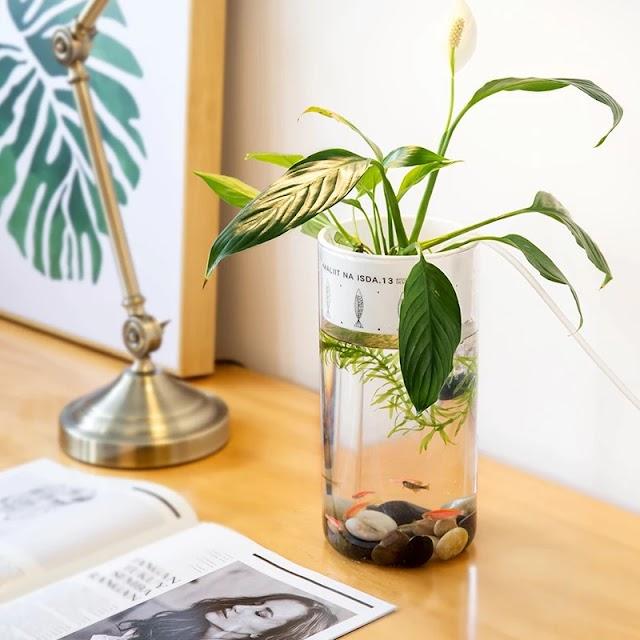 【家品】魚草生態迷你缸 令生活更輕鬆