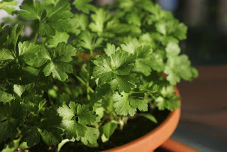 Parsley - Bagbani