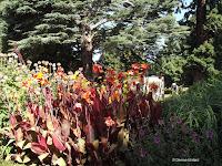 Cannas - Christchurch Botanic Gardens, New Zealand