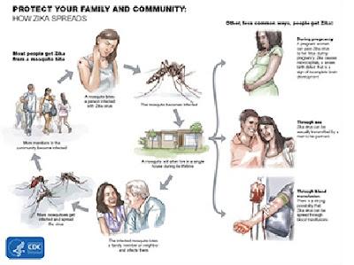 penularan virus zika melalui seksual