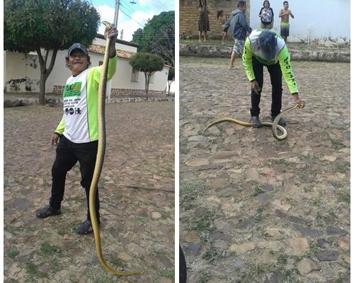 Pedro II: Cobra que mede dois metros é encontrada em garagem
