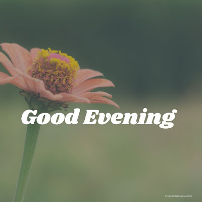 good evening wishes with flowers