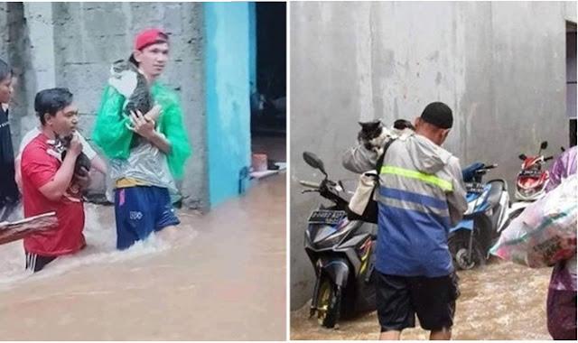 Bikin Haru, Inilah 5 Potret Evakuasi Kucing Saat Banjir Jakarta Awal Tahun 2020