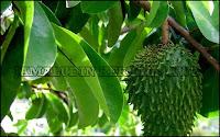 http://pengobatanmultikhasiat30.blogspot.com/2018/08/cara-mengobati-kanker-buli-kandung.html
