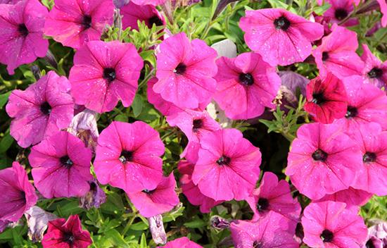 22 varietas tanaman pengisi yang biasa di gunakan pada taman vertikal
