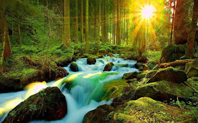 Download Forest 4K Ultra HD wallpaper