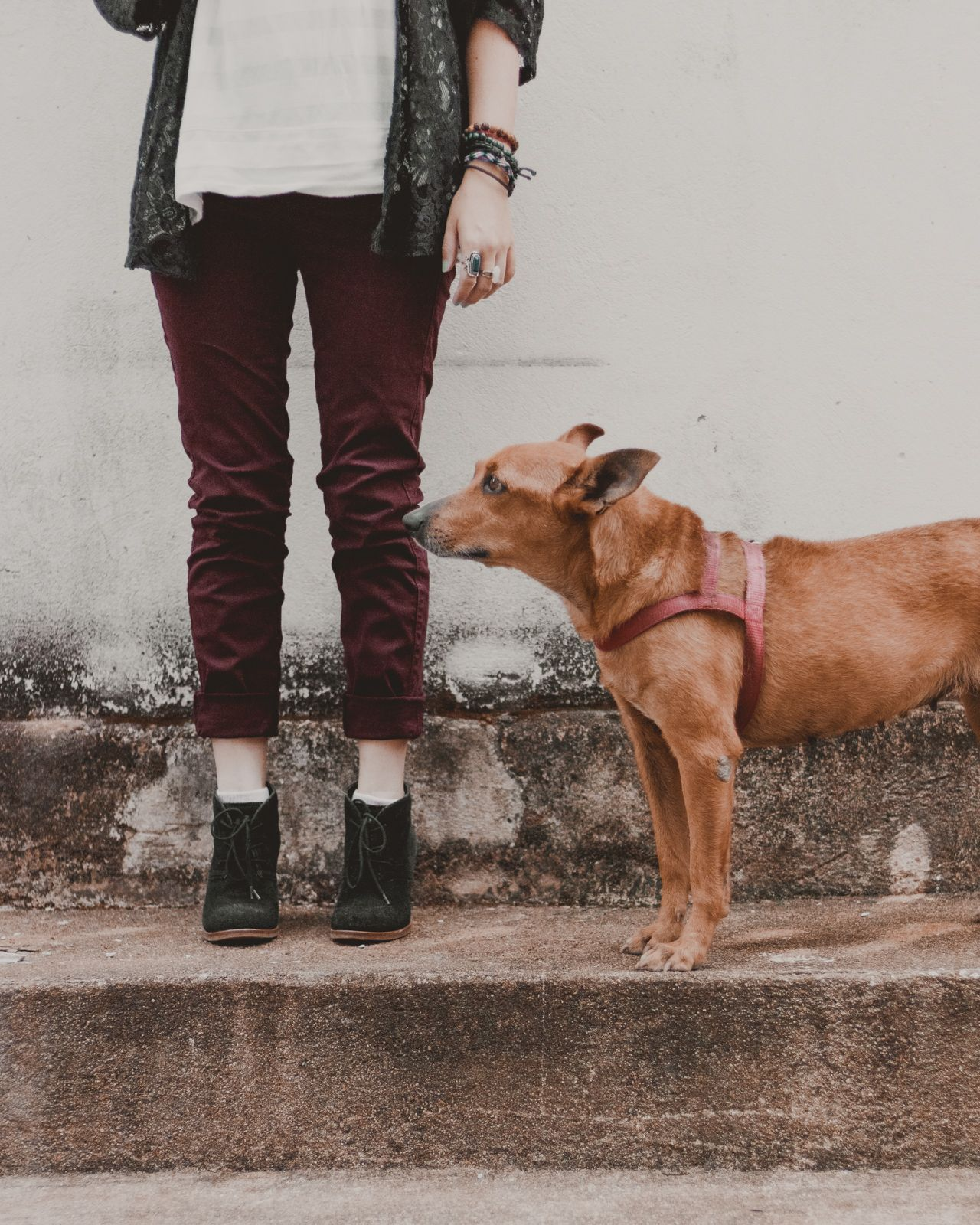 meio look e cachorro de tiracolo