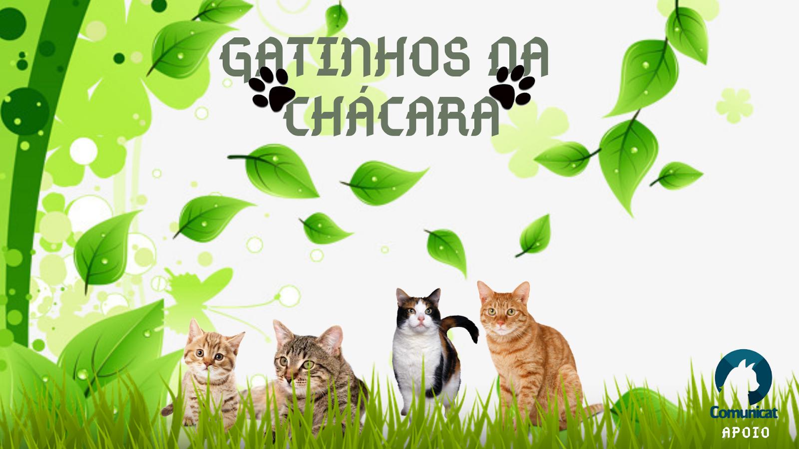 gatinhos da chacara comunicat