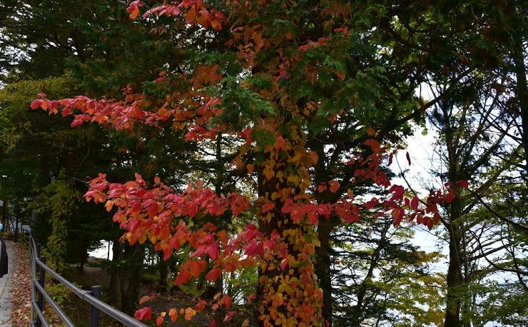 中禅寺湖湖畔の紅葉(3)